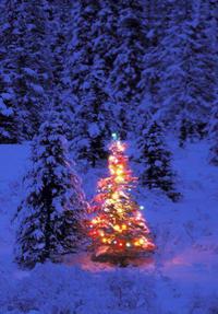 christmastreeforest
