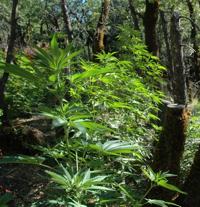 potnationalforest
